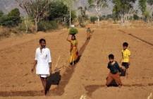 TimesofIsrael: A better potato for India, via Israeli technology
