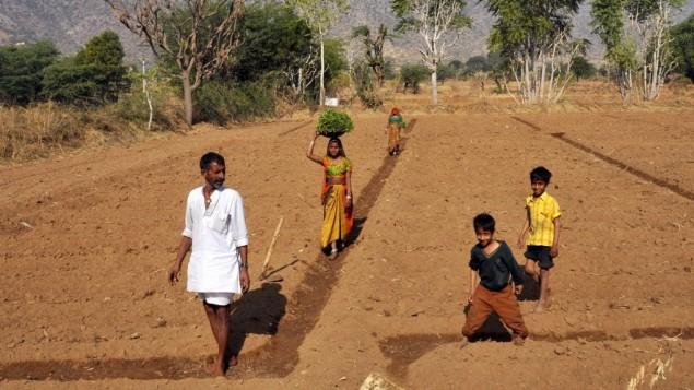 Indian men, women and children work on a field in Pushkar, Rajasthan (Photo credit: Serge Attal/Flash90